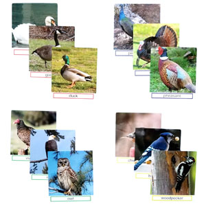 Photo cards are a great way to introduce the birds to the person with dementia